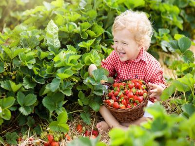 erdbeeren pflücken leichlingen